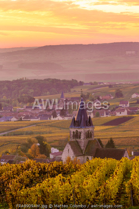 Ville Dommange and its vineyards, Champagne Ardenne, France