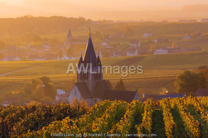 Ville Dommange and its vineyards, Champagne Ardenne, France