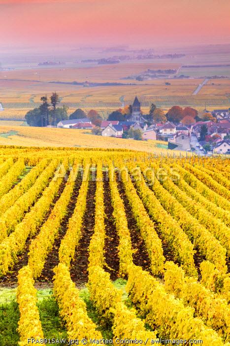 Sunset oevr the vineyards of Oger, Champagne Ardenne, France