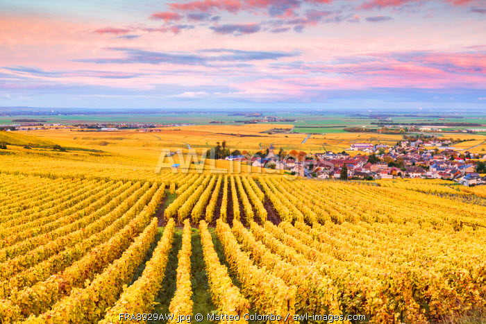 Sunset over the vineyards of Oger, Champagne Ardenne, France