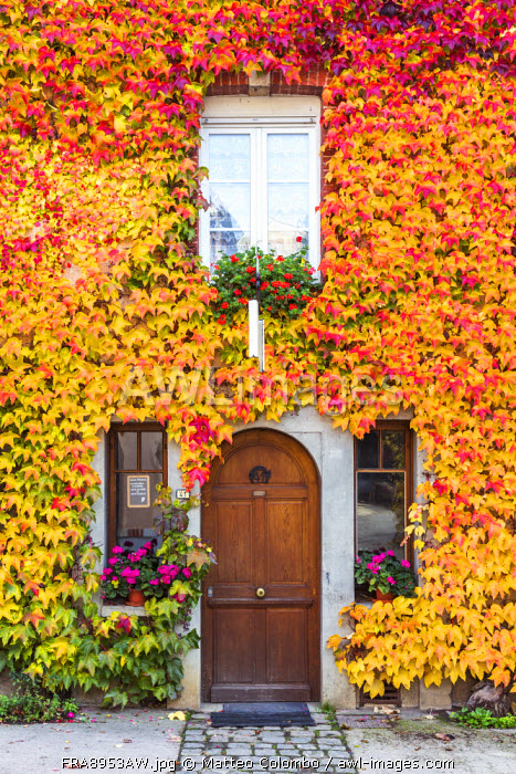 Typical house covered with vines, Hautvilliers, Marne valley, Champagne Ardenne, France