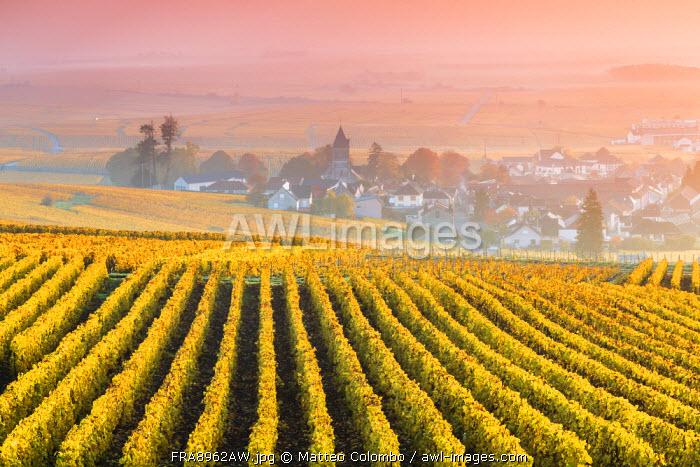 Vineyards in the mist at sunrise, Oger, Champagne Ardenne, France