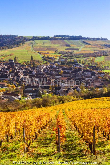 Vineyards surrounding Irancy, Burgundy, France