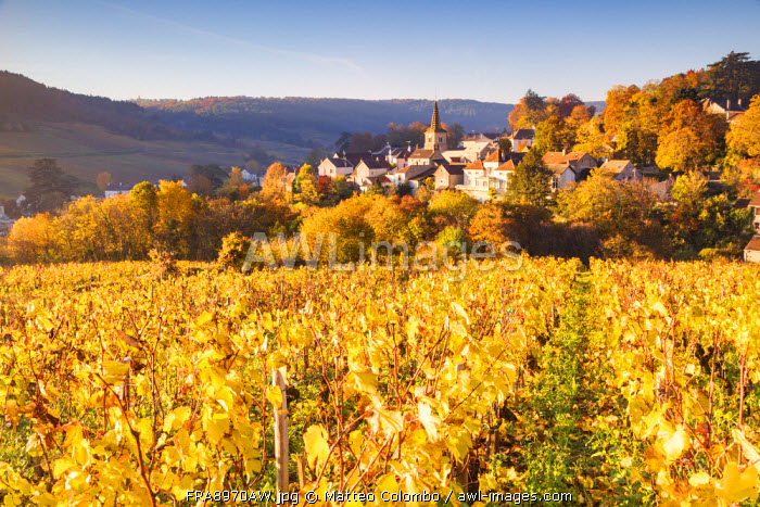 Pernand-Vergelesses and its vineyards, Cote d'Or, Burgundy, France