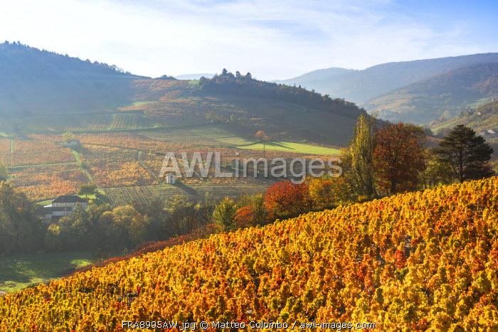 Lantignie and its vineyards, Beaujolais region, Rhone Alpes, France