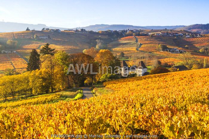 Lantignie, Beaujolais region, Rhone Alpes, France