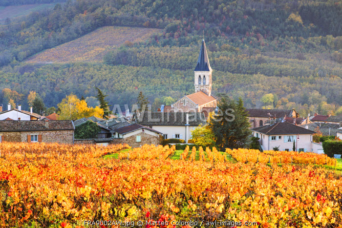 Vineyards of Julienas, Beaujolais region, Rhone Alpes, France