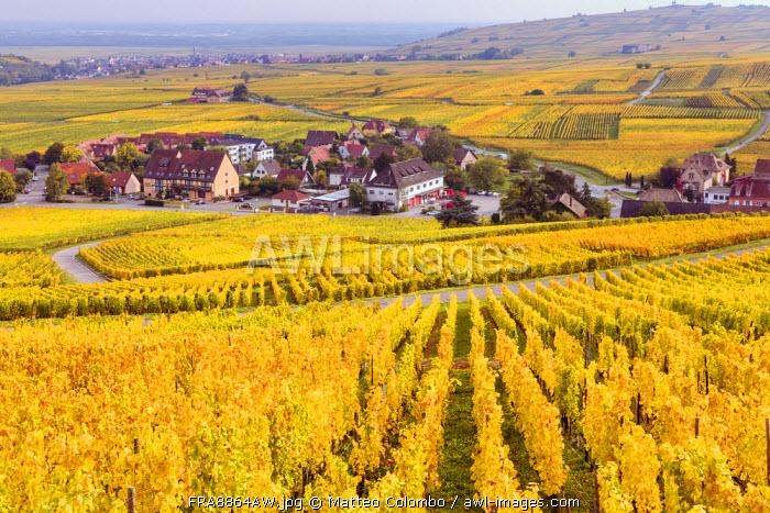 Vineyards, Riquewihr, Alsace, France