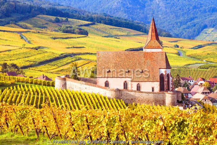 Vineyards, Hunawihr, Alsace, France
