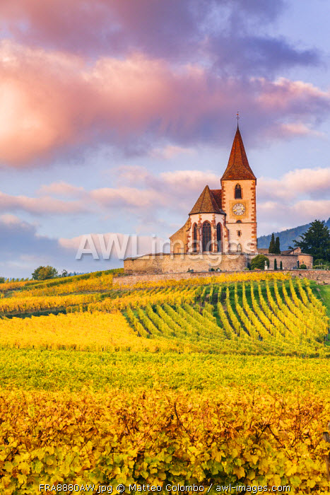 Vineyards, Hunawihr, Alsace, France