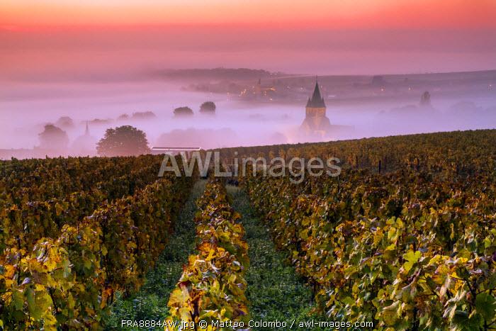 Misty sunrise over the vineyards of Ville Dommange, Champagne Ardenne, France