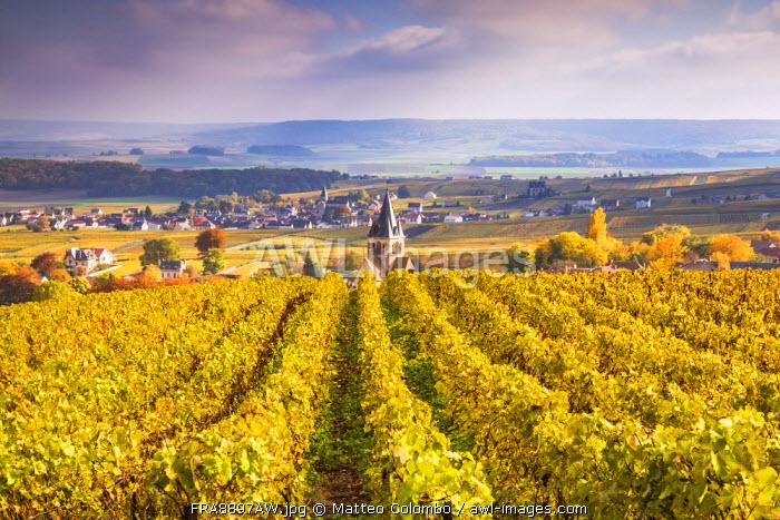 Vineyards of Ville Dommange, Champagne Ardenne, France