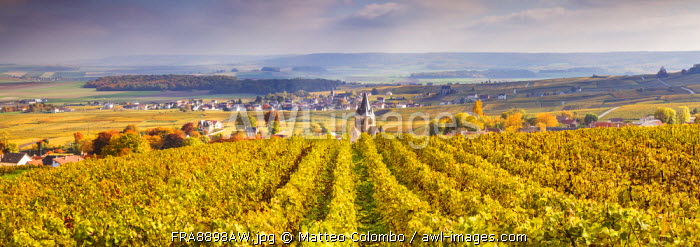 Vineyards of Ville Dommange, Champagne Ardenne, France