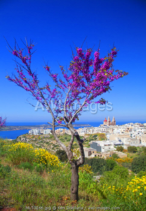 Europe, Maltese Islands, Malta. The village of Melllieha overlooking the sea.