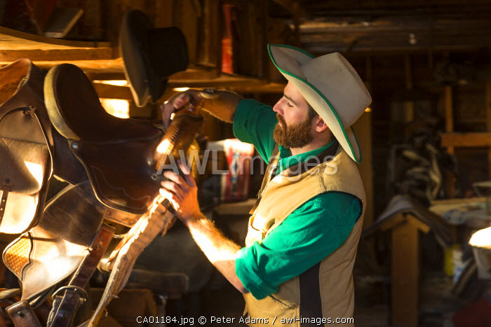 Cowboy taking saddle from store room on ranch, British Columbia, Canada