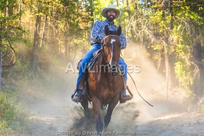 Cowboy galloping through woods, British Columbia, Canada