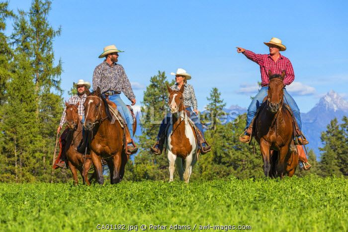 Cowboys & cowgirls galloping horses across grassland British Columbia, Canada