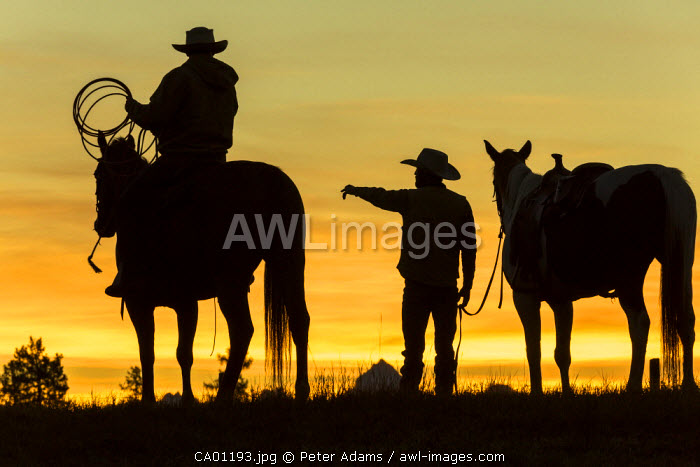 Cowboys & horses in silhouette at dawn on ranch, British Coumbia, Canada