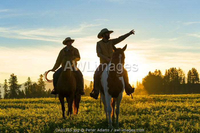 Cowboys riding across grassland with moutains behind, early moring, British Columbia, B.C., Canada