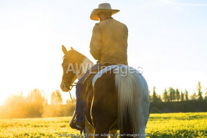Cowboy sat on horse at sunrise, British Columbia, Canada