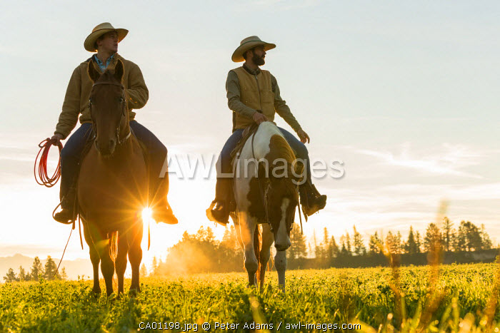 Cowboys riding across grassland with moutains behind, early morning, British Columbia, B.C., Canada