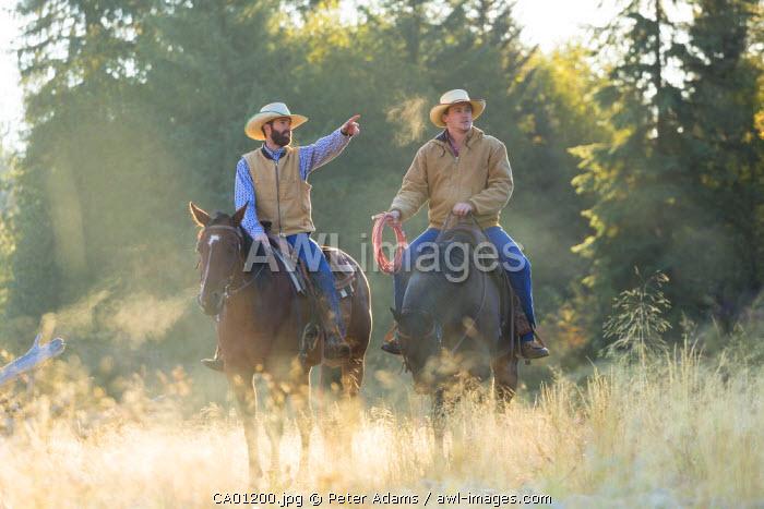 Cowboys & horses, British Columbia, B.C., Canada