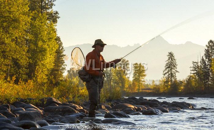 Fly fisherman casting & fishing, British Columbia, B.C., Canada