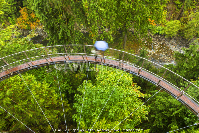 Tourists in Capilano Suspension Bridge and Park, Vancouver, British Columbia, Canada