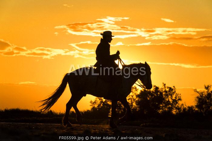 Gardian, cowboy & horseman of the Camargue with white horses, Camargue, France