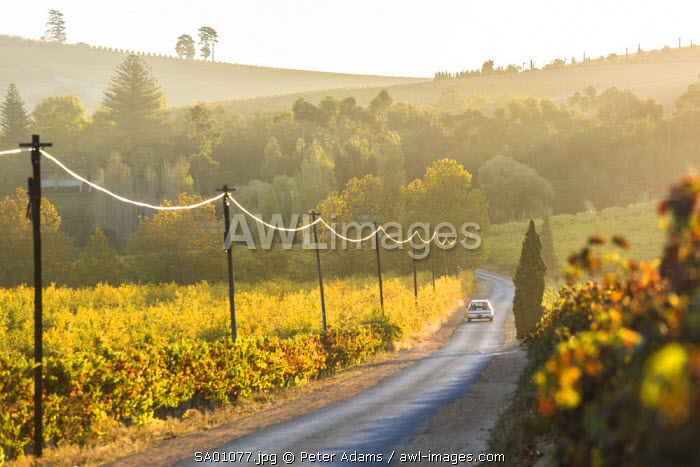 Car & Road through Winelands & vineyards, nr Franschoek, Western Cape Province, South Africa