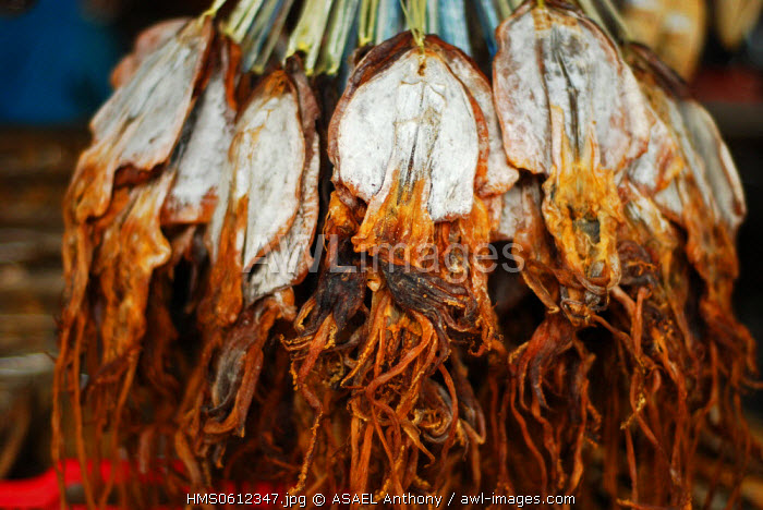 Malaysia, Borneo, Sabah State, Semporna, dried octopus