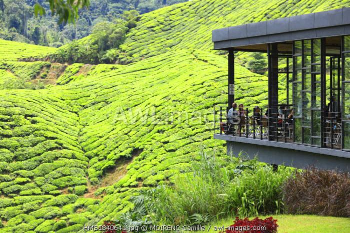 Malaysia, Cameron Highlands, Brinchang, BOH tea plantation, tea shop