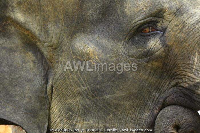 Malaysia, Pahang State, Kuala Gandah, elephant sanctuary