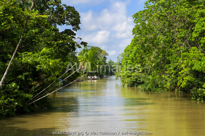awl-images.com - Brazil / South America, Brazil, Para state, Belem, an igarape (creek) lined with varzea forest in the Amazon near the city