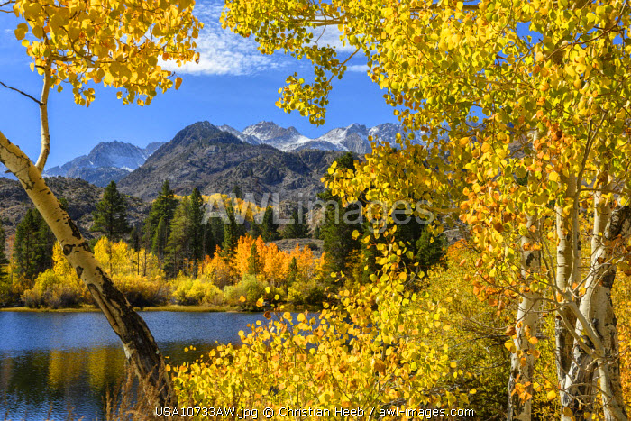 awl-images.com - USA / USA, California, Eastern Sierra, Bishop, Bishop creek in fall