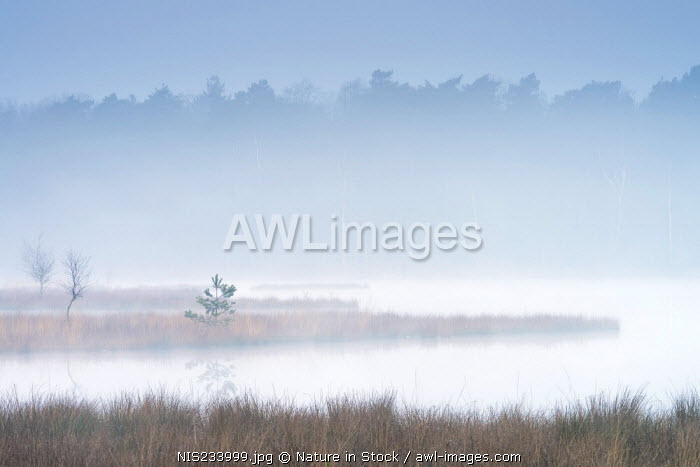 awl-images.com - The Netherlands / Morning mist over a fen with treetops in the background, The Netherlands, Utrecht, Utrechtse Heuvelrug