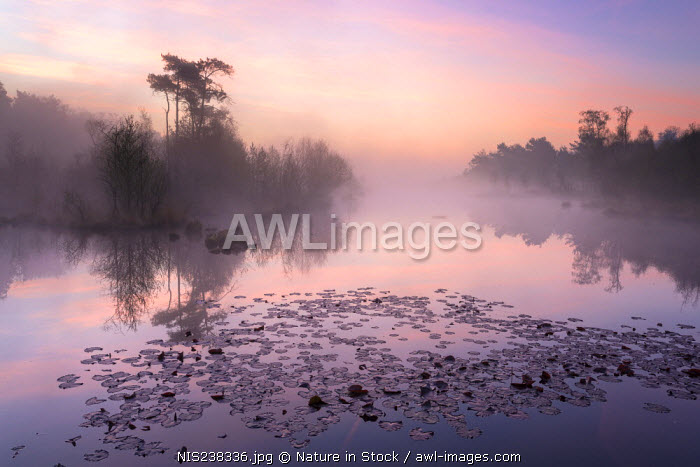 awl-images.com - The Netherlands / Overview of the Haaksbergerveen during sunrise, The Netherlands, Overijssel, Haaksbergerveen