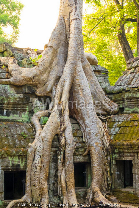 Ta Prohm temple (Rajavihara), Angkor, UNESCO World Heritage Site, Siem Reap Province, Cambodia