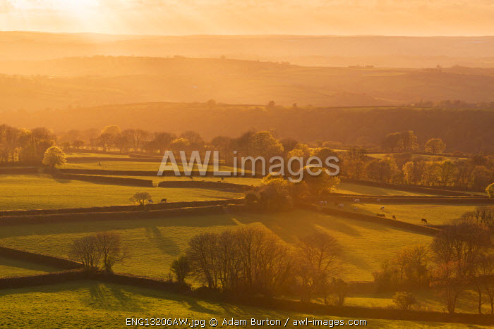 awl-images.com - England / Rolling farmland at sunset, West Devon, England.