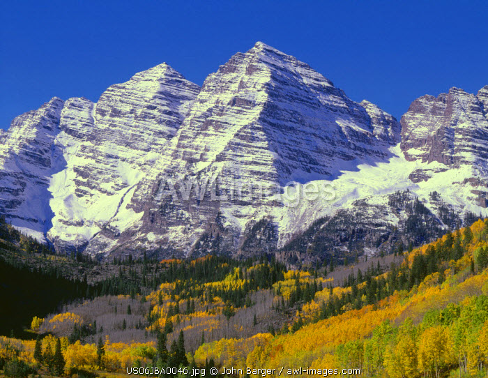 USA, Colorado, White River National Forest, Maroon Bells Snowmass Wilderness, The Maroon Bells display autumn snow above fall colored aspen and scattered conifers