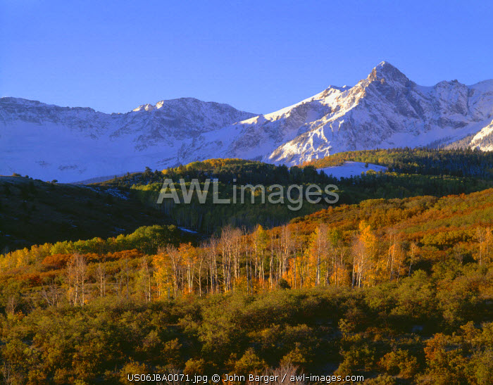 USA, Colorado, Uncompahgre National Forest, Sunrise light on snow clad peaks of the Sneffels Range and fall-colored aspen