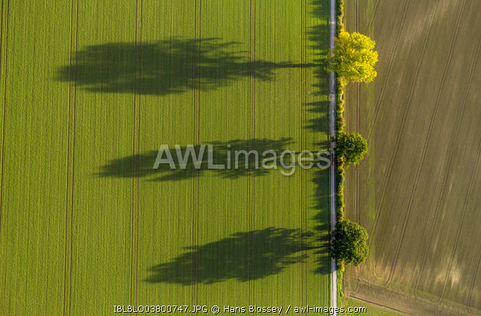 Aerial view of fields and three trees with shadows, North Rhine-Westphalia, Germany