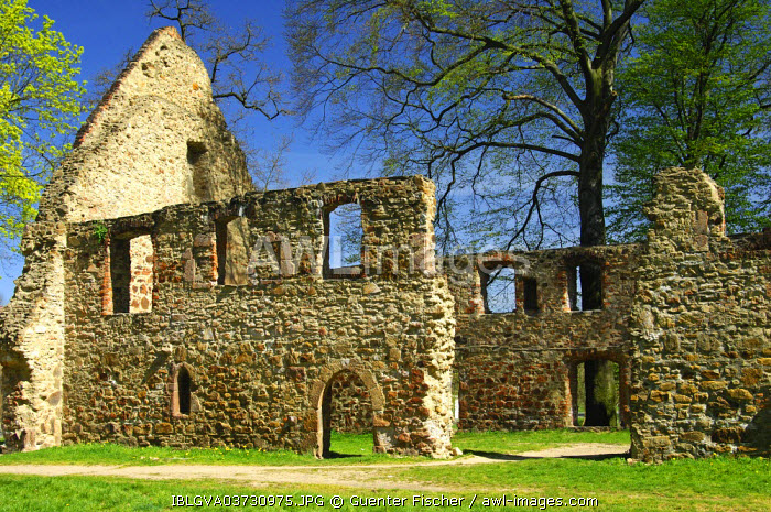awl-images.com - Germany / Ruins of Nimbschen Abbey, Cistercian convent of Marienthron or Mary's Throne, near Grimma, Saxony, Germany