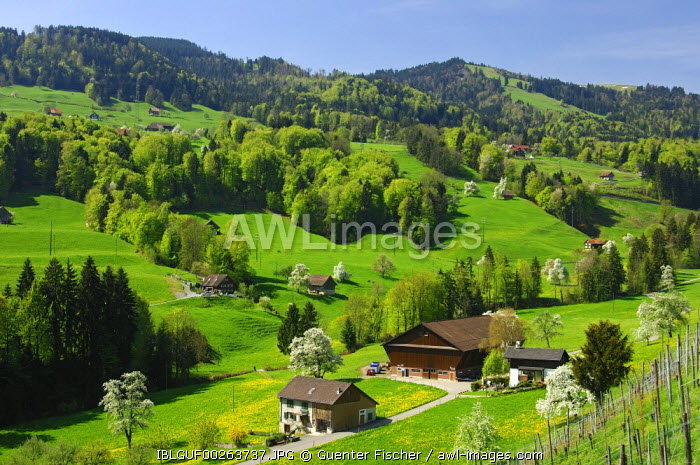 awl-images.com - Switzerland / Spring in the cantone of Schwyz, Switzerland