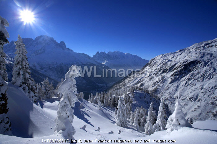 France, Trees in winter, tete des Posettes, Chamonix valley, Mont-Blanc,