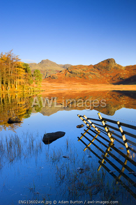 Mirror like reflections at Blea Tarn, Lake District National Park, Cumbria, England, UK. Autumn (November) 2009