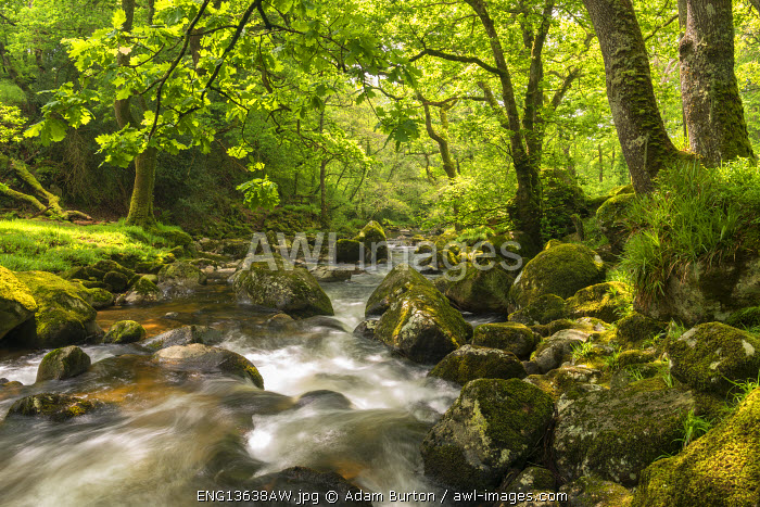 River Plym rushing through Dewerstone Wood, Shaugh Prior, Dartmoor, Devon, England. Spring (May) 2016.