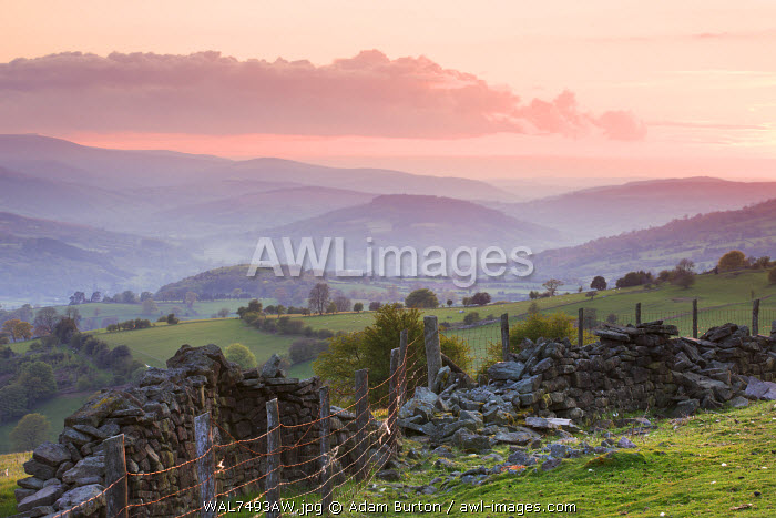 Dry stone wall on the slopes of Sugar Loaf mountain, looking towards the Usk Valley at sunset, Brecon Beacons National Park, Monmouthshire, Wales. Spring (May) 2010.