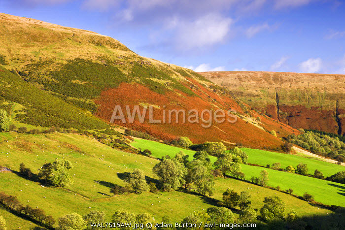 Vale of Ewyas and Offa's Dyke, Brecon Beacons National Park, Monmouthshire, Wales, UK. Autumn (October) 2009