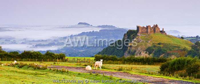 Carreg Cennen Castle at dawn on a misty summer morning, Brecon Beacons National Park, Carmarthenshire, Wales, UK. Summer (August) 2009